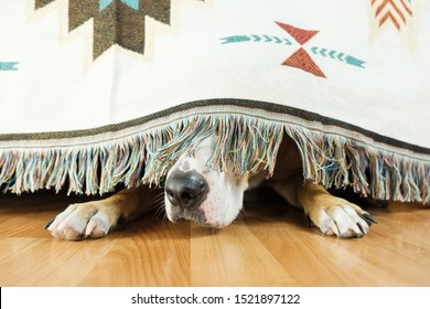 The dog is hiding under the sofa and afraid to go out. The concept of dog's anxiety about thunderstorm, fireworks and loud noises. Pet's mental health, excessive emotionality, feelings of insecurity.