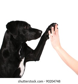 Dog high five isolated on white background