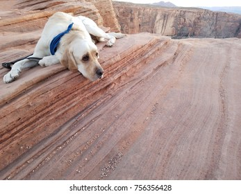 Dog hiking in the American Southwest