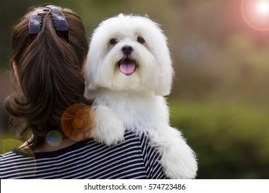 Dog and his owner / Brunette woman holding white maltese dog on her shoulder