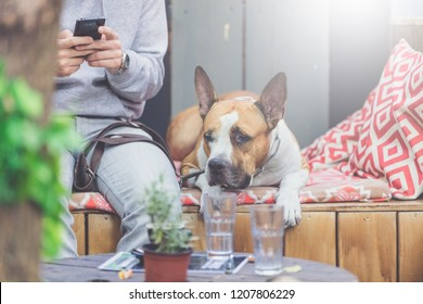 Dog and his owner sitting on bench in outdoor cafe.