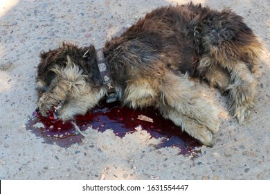 A dog is hit by a car and died on the road. Accidents with pets.