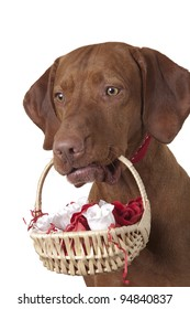 dog holding basket with white and red roses on white background
