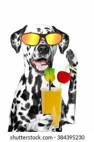 dog holding a cocktail. summer, beach, sun, heat. isolate on white background