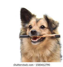 Dog holding eco bamboo toothbrush. Dental hygiene concept. Pet dental care to prevent health issues. Close-up of mixed breed dog with white healthy teeth. Pet home care habits to keep them healthy.