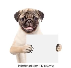 Dog holding empty board. isolated on white background