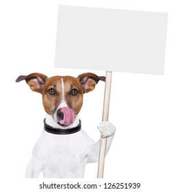 dog holding an empty placard and licking