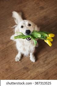 Dog holding flowers