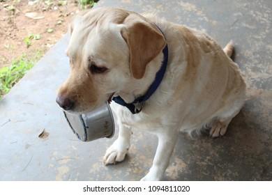 Dog holding a food bowl