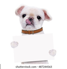 Dog holding in his paws white banner. Isolated on the white background.