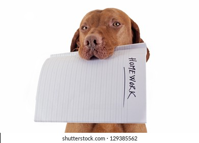 dog holding homework in mouth on white background
