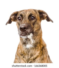 dog holding a keys in its mouth. isolated on white background