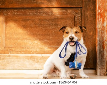 Dog holding leash in mouth sitting in front of door with poop bag dispenser attached to harness