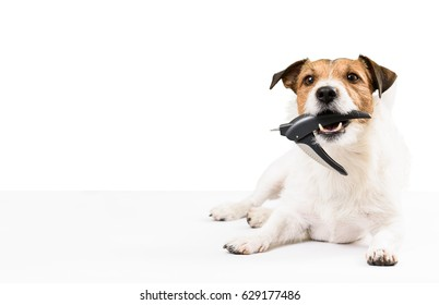 Dog holding nail clipper in mouth needs nails trimming