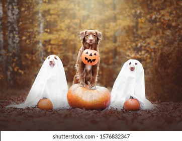 Dog holding a pumpkin and two ghosts in Halloween in October