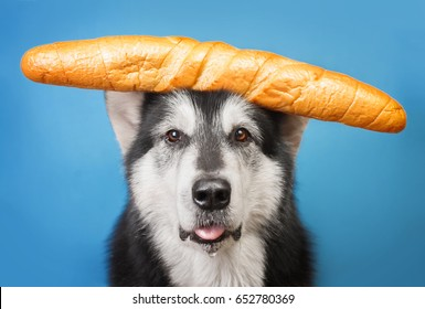dog holds a baguette on the head