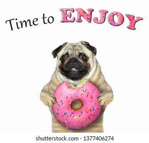 The dog holds a big bitten pink donut. Time to enjoy. White background. Isolated.