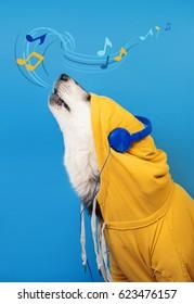 A dog in hoodie and headphones sings to music