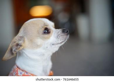 dog with hopeful eye