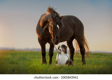 A dog and a horse. Friendship of a dog and a horse in nature