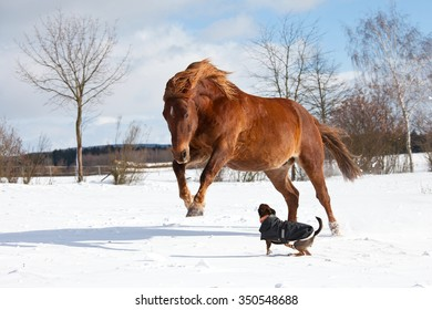 Dog and horse playing together in winter pasture