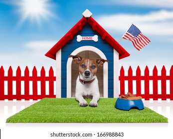dog in house with bowl full of food and american flag