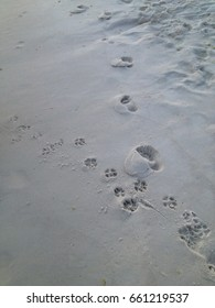 Dog and human footprints in sand