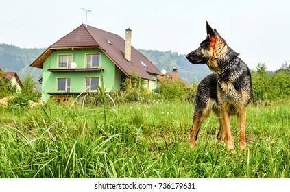 Dog hunted house