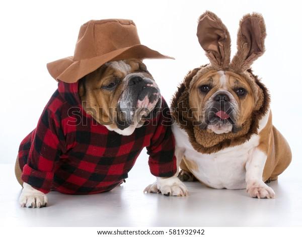 dog hunting rabbit