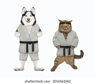 A dog husky and a beige cat are karate athletes in kimono. White background. Isolated.