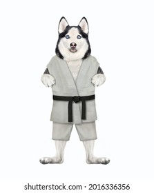 A dog husky karate athlete in a kimono is exercising. White background. Isolated.