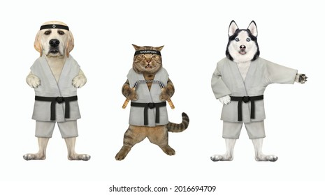 A dog husky, dog labrador and a beige cat with nunchucks are karate athletes in kimono. White background. Isolated.