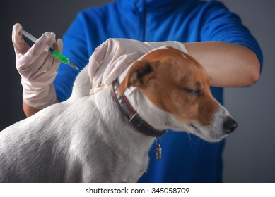 dog injecting by vet doctor