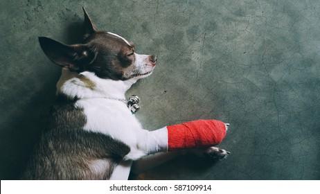 Dog injured