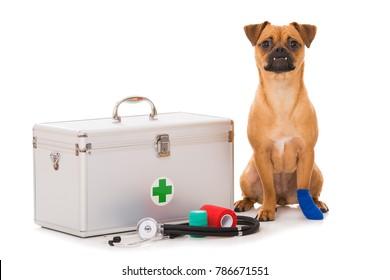Dog with injured paw