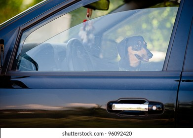 Dog inside of a car waiting on his owner