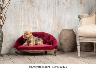 Dog in interior