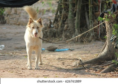 The dog is interrupted by a rope attached to a tree.