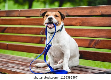 Dog inviting for a walk outside sitting at a bench and holding a leash in mouth