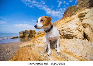 dog jack russel terrier on the background of the beach and the sea in summer