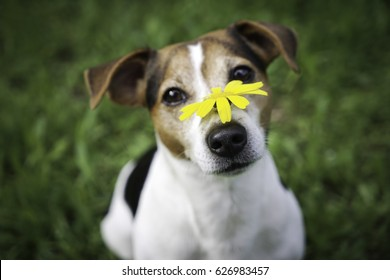 Image result for royalty free images of allergic pets