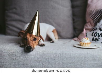 Dog Jack Russell Terrier 's birthday
