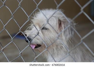 Dog in jail