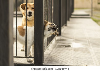 Dog In Jail Waiting For Adoption