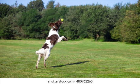 dog jumping and catching a ball