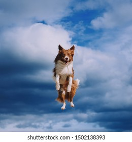 Dog is jumping on sky with clouds background