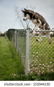 Dog jumping over a fence
