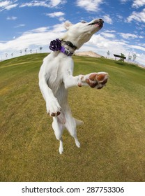 Dog jumping at the park on a sunny day captured with a fish eye lens