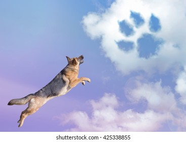 dog jumping in the sky clouds