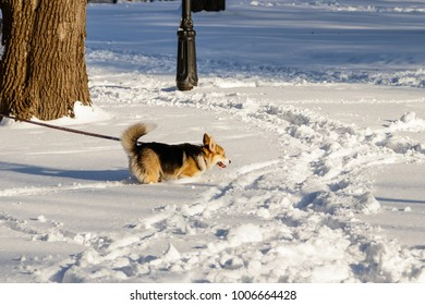 dog jumping in the snow close up